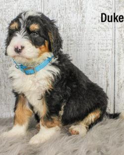 Duke 06