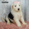 Heather 07