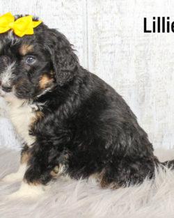 Lillie 04
