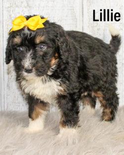 Lillie 05
