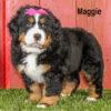 Maggie 03