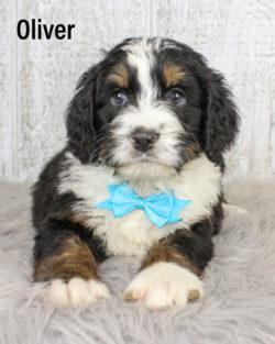 Oliver 02