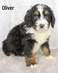 Oliver 04