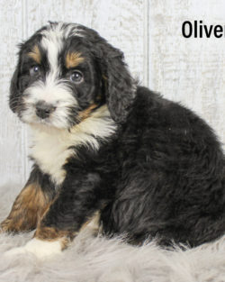 Oliver 05