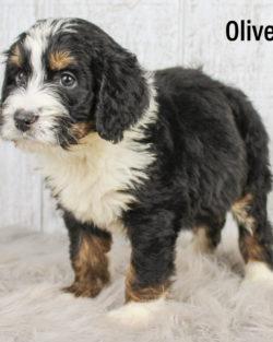 Oliver 07