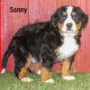Sonny 03