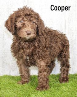 Cooper 02