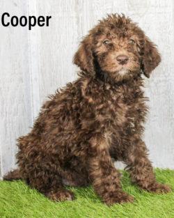 Cooper 07