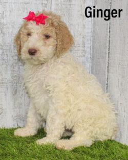 Ginger 05