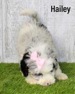 Hailey 03