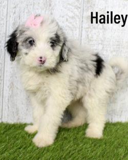 Hailey 04