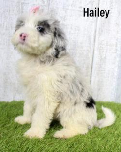Hailey 06