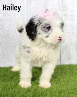 Hailey 07