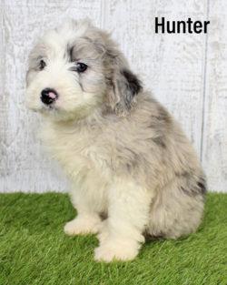 Hunter 05