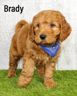 Brady 01