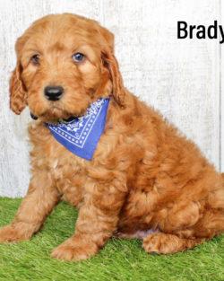 Brady 06