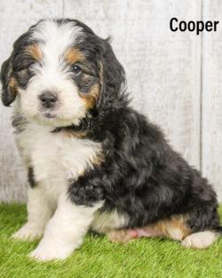 Cooper 01