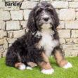 Barkley 01 1