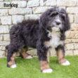 Barkley 02 1