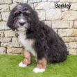 Barkley 05 1