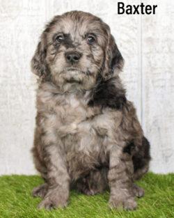 Baxter 07