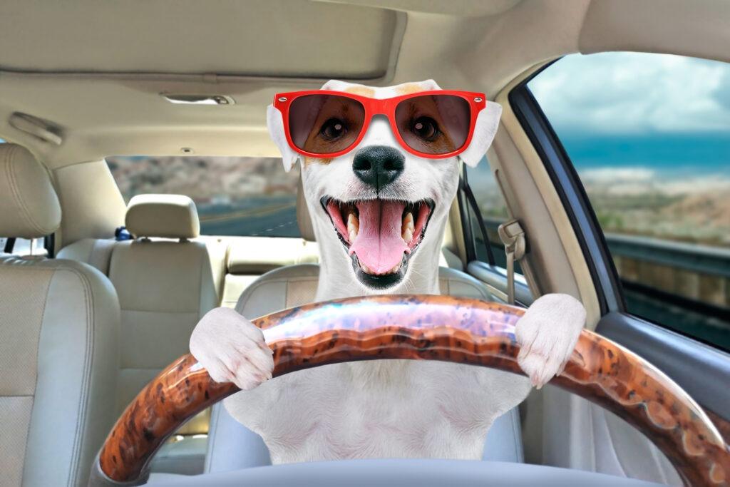 Puppy Transportation