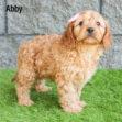 Abby 01