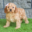 Abby 03