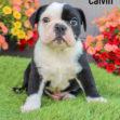 Calvin 06