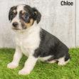 Chloe 03