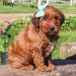 Roxy 04
