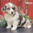 Samson 04