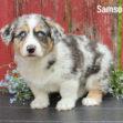 Samson 05